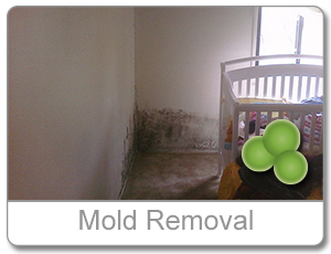 mold removal md